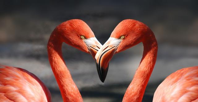 flamingo-600205_960_720